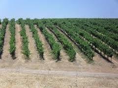 De la Vigne dans le Nevada