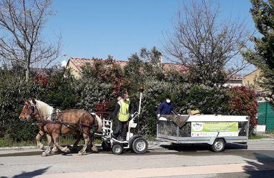 Un service de collecte de tri sélectif à cheval.