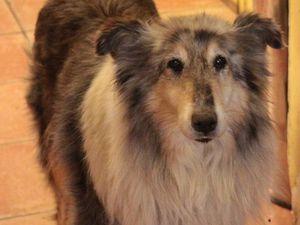 Lassie Colley 12 ans chez nopus actuellement en Haute Normandie