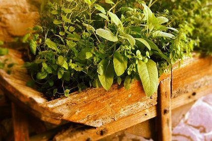 Una vecchia carriola ricca di profumi e piante aromatiche