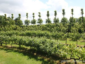 Visite d'un jardin remarquable: Le point du jour