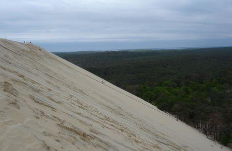 La dune du Pyla et ses grands oiseaux