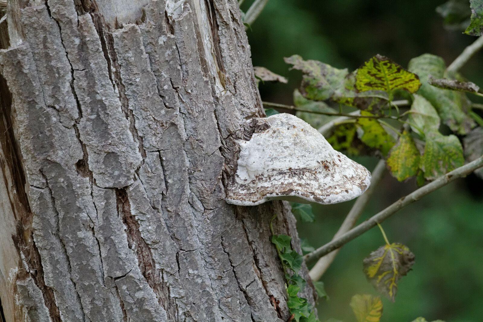 42 - Les champignons de la Haute-Île