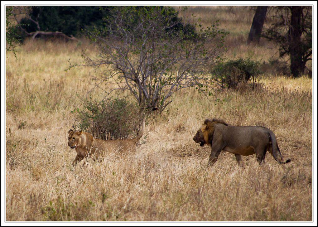Photos de nos safaris dans le Parc Nationale du Tarangire en Juillet 2010.
