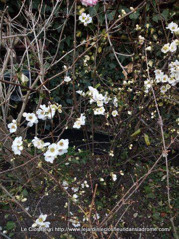 Mon jardin Le Clos fleuri en février