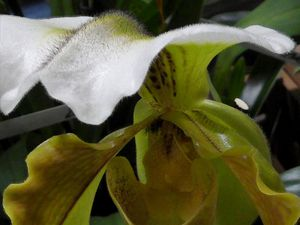 La foule au salon des orchidées à Quimper