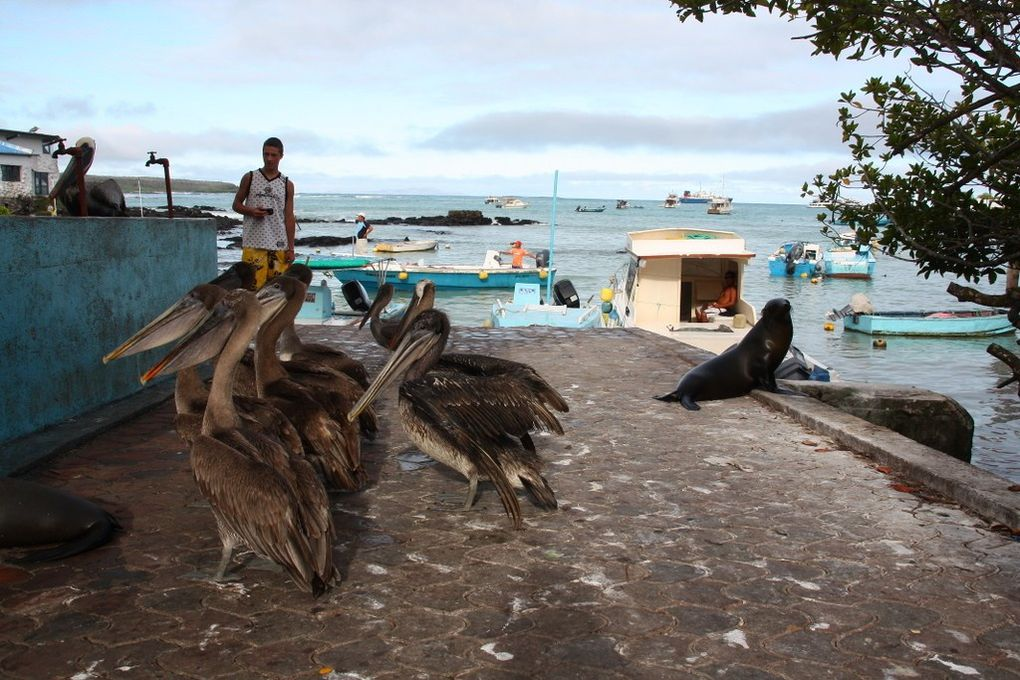 Album - Galapagos