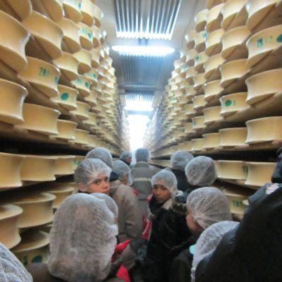 Visite de la coopérative laitière