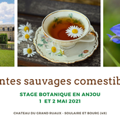 STAGE plantes sauvages comestibles - Angers coach jardin