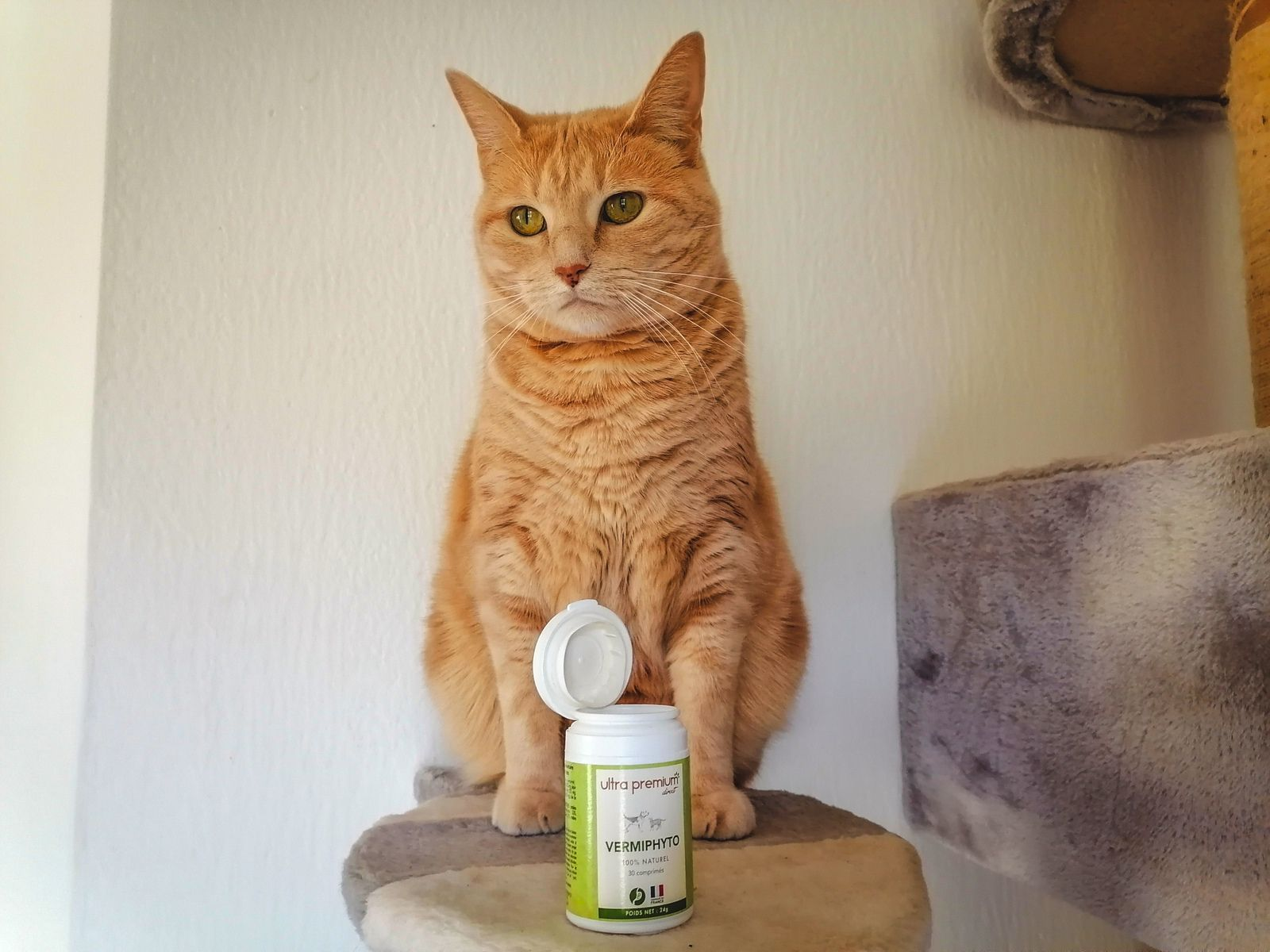 Vermifuge naturel pour chat