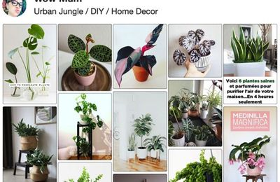 "🌿 Ma wishlist printanière ""Urban Jungle"" 🌿"