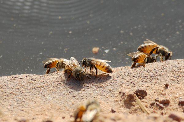 """La saison chaude arrive, les abeilles s'activent autour des puits. La ruche de Bocar Ba, au pied d'un baobab sur lequel 2 essaims sont déjà installés (entre Sansanding et Goundafa). Ca rappellera des souvenirs """"piquants"""" à Romain ;-)"""