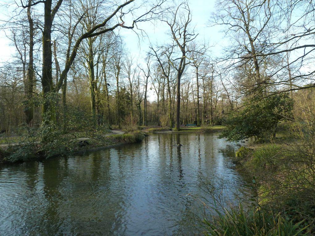 Marche nordique au bois de Vincennes - 7 km.