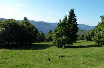 Un petit coucou des Vosges Alsaciennes