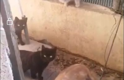 Sauvetage de 13 chats par deux associations