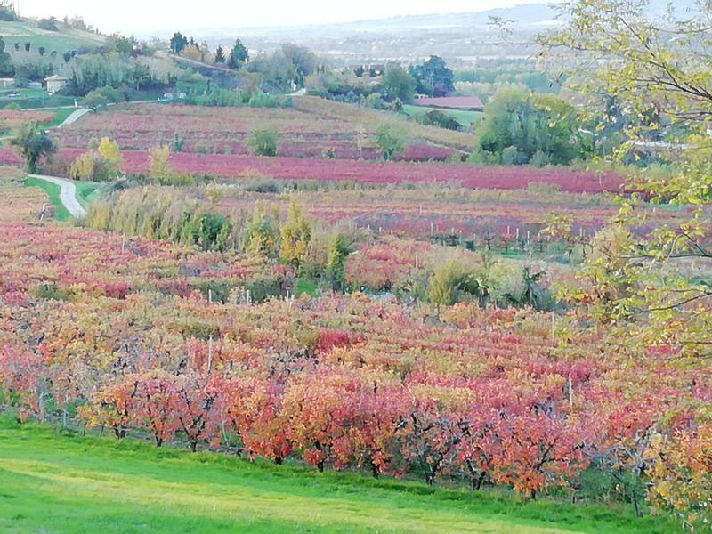 paysages vignes Drôme des collines
