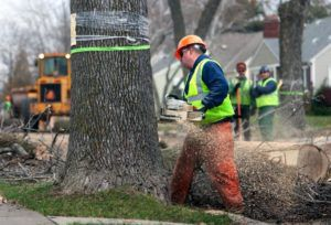Do's and Don'ts of Tree Removal in Sarasota