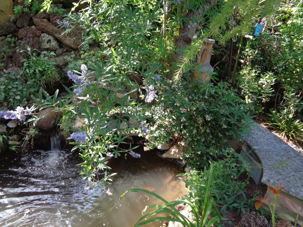 "Mon jardin ""Le Clos fleuri "" en juillet 2020"