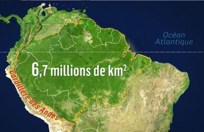 Seconde : la forêt amazonienne au Brésil (activité en distanciel)