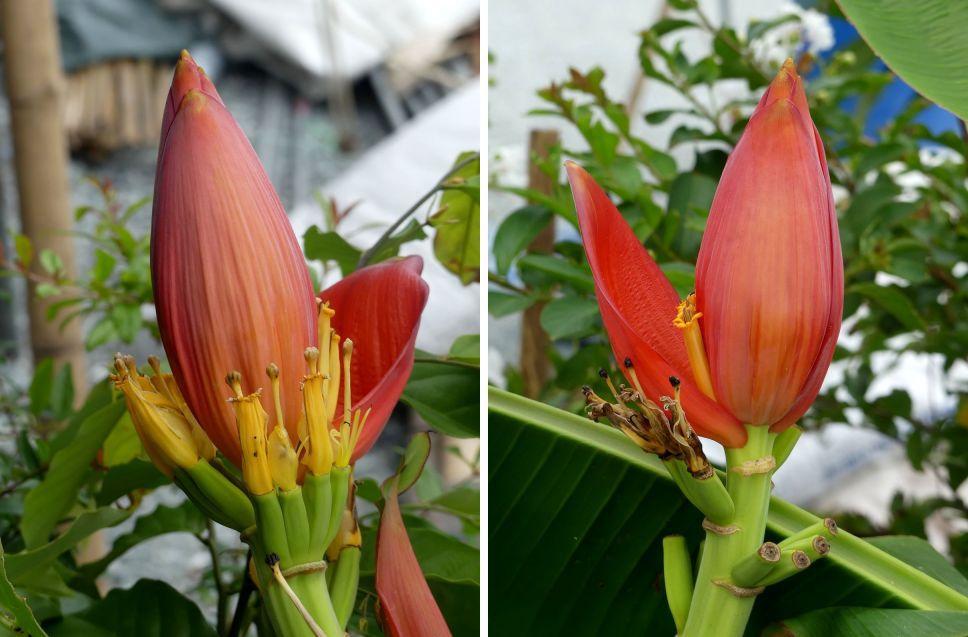 Fleurs du jour (21-14)