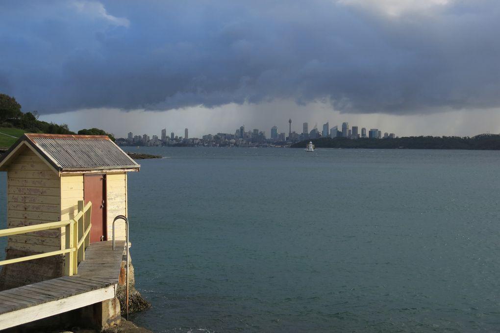 Walking around Sydney: Watson bay, Bondi Beach, Bronte Beach, with Mile.