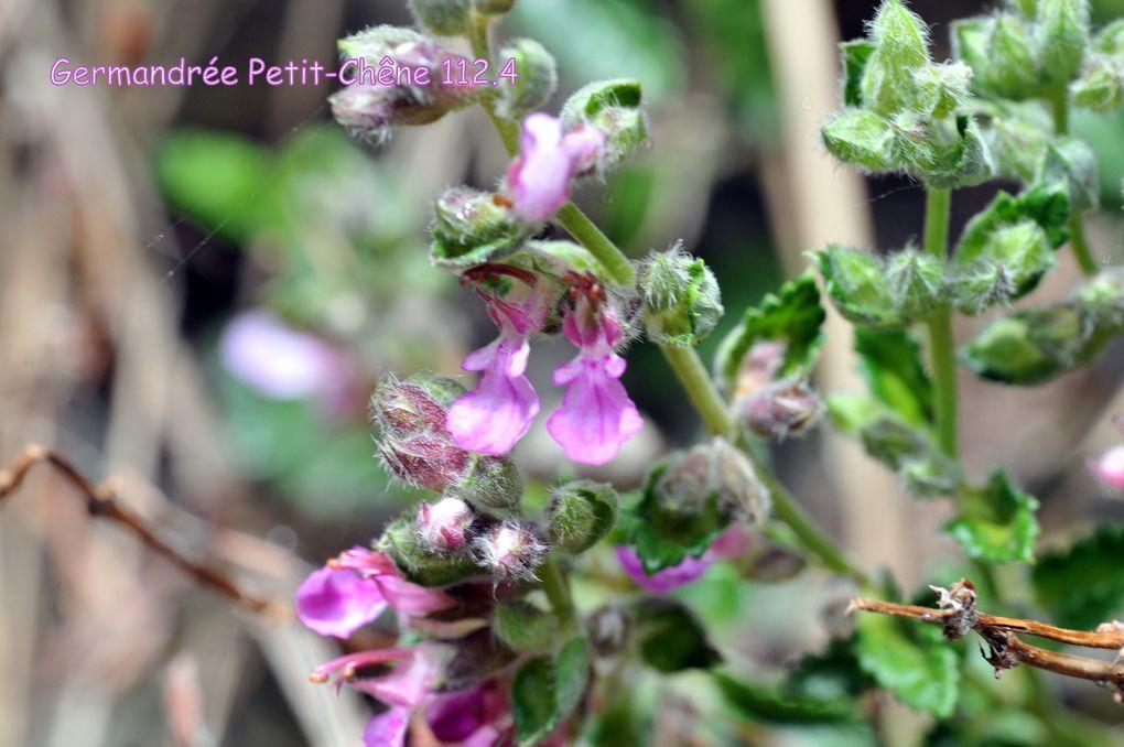 La Flore du Louron