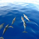 SWIM WITH WILD DOLPHINS IN BIG ISLAND, HAWAII - Communications Sylvie Bibeau