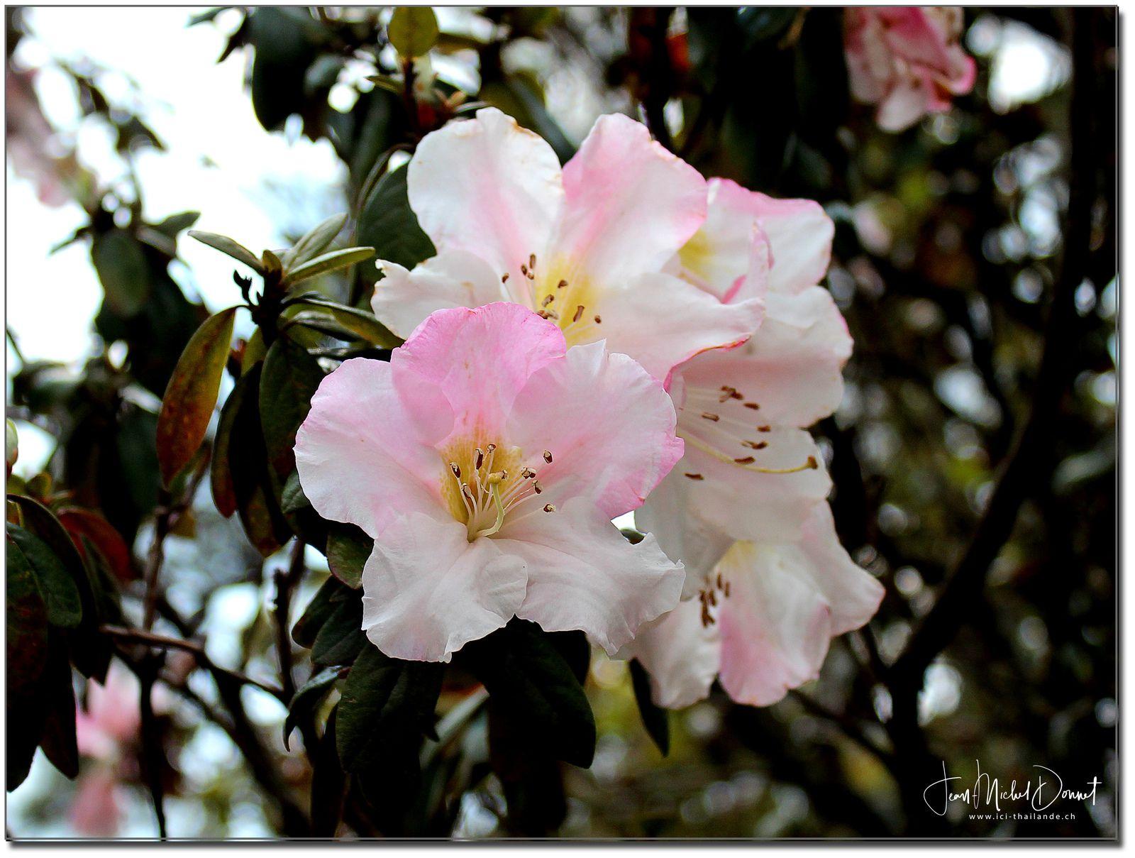 La flore du parc national de Phu Kradung