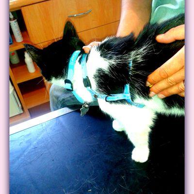 Clinique du Docteur Poncet, MON vétérinaire à Olonne sur Mer !!!