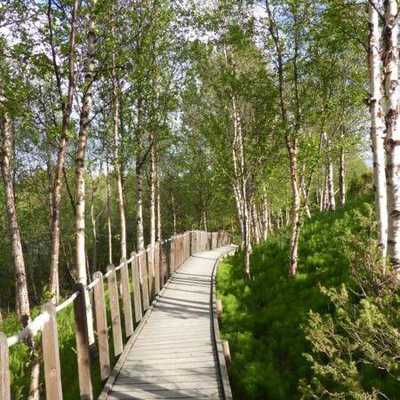 ...des passerelles  pour préserver et visiter le site...