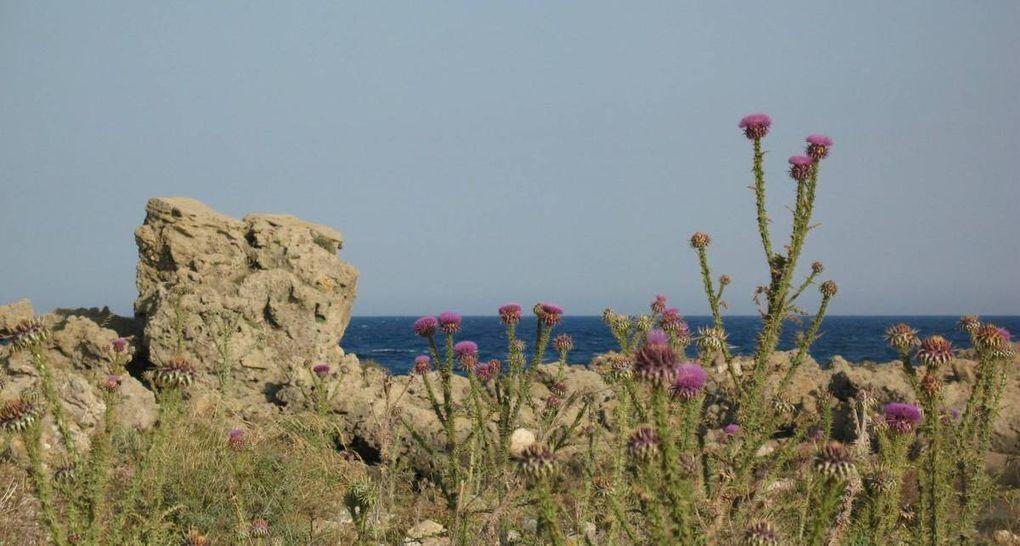 Crète - Paleochora