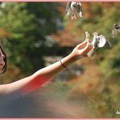 La demoiselle aux oiseaux - Images du Beau du Monde