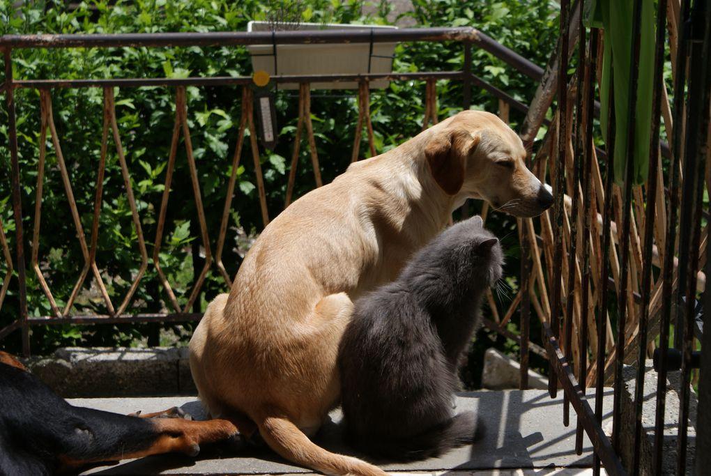 ce sont nos animaux ou ceux de passage, ou ceux qui ne sont plus et que nous gardons pour ne pas oublier.