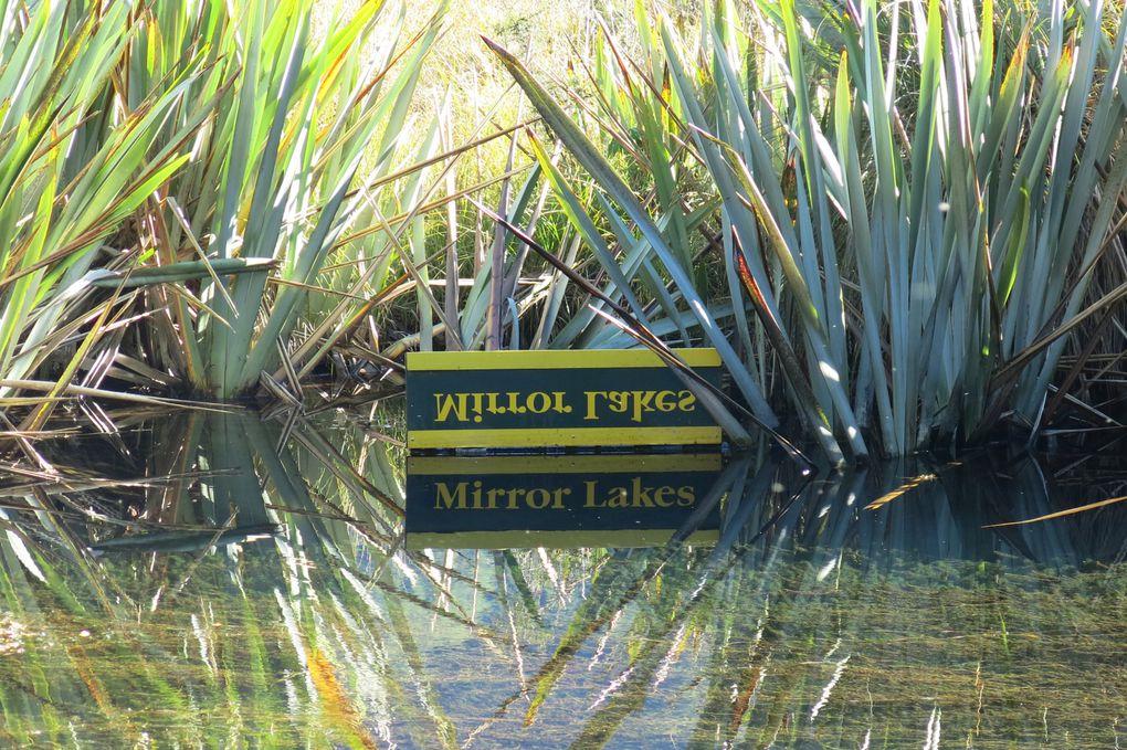 Henry Creek, mirror lake, Eglinton valley, Lake Marian, Milford sound.