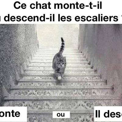 Ce chat monte-t-il ou descend-il les escaliers ? La photo qui enflame le web