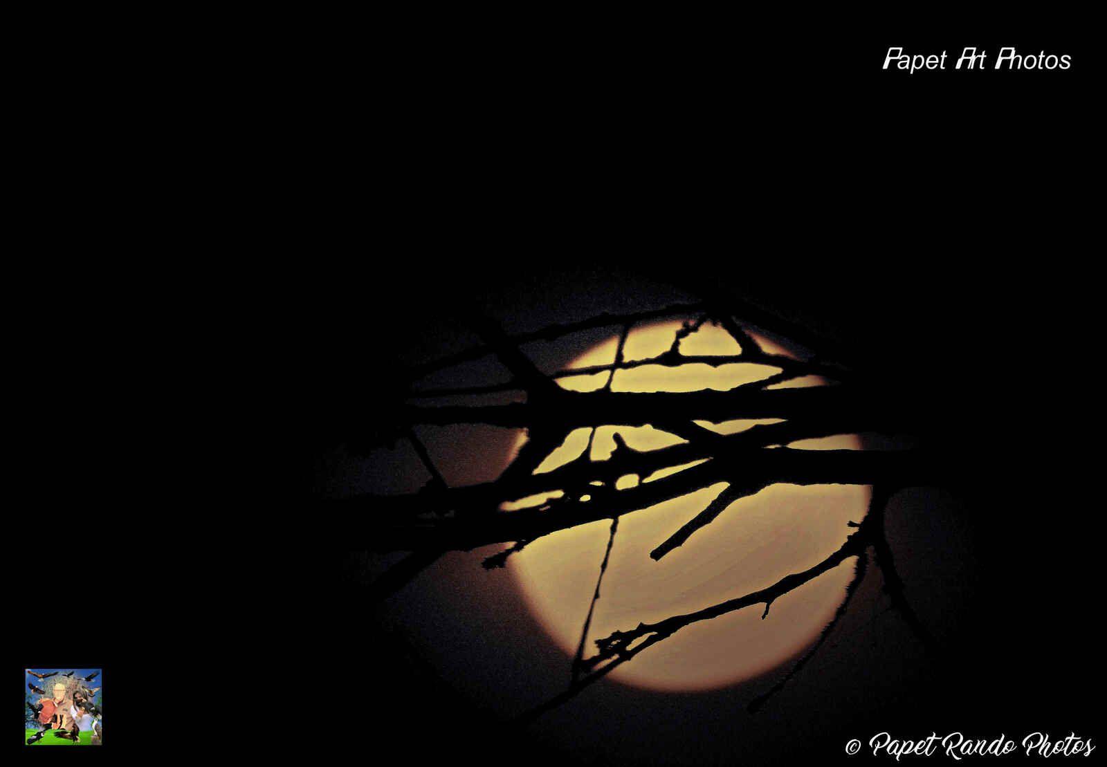 La Lune du mois d'avril se nomme La Lune Rose,Son Credo? Arbres fleuris, élans relationnels, abondance et renouveau, Bref Amour gloire et Beauté  Photos avec Nikon 7100,objectif 50-500 Sigma, avec par moment, converter 2x en plus = 100-1000, avec le pied, ou main levée