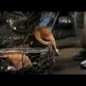 PETITION: Nobody Touch The Dog - Stop Dog Cruelty and Tortures in China