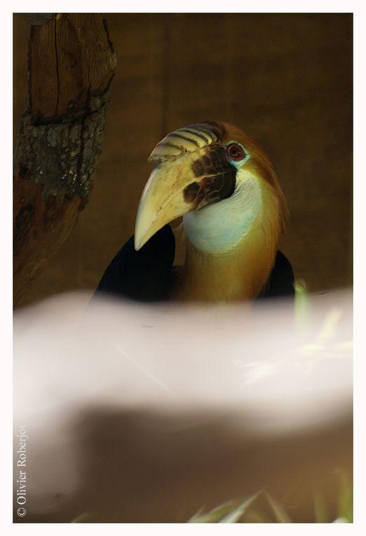 """Le Parc Zoologique Tropical de La Londe, sur la cote d'azur offre une belle collection d'oiseaux dont des perruches, Aras et beaucoup de Calaos (oiseaux pouvant être assez grands et possédant sur le bec un """"casque"""" creux leur donnant un aspect part"""