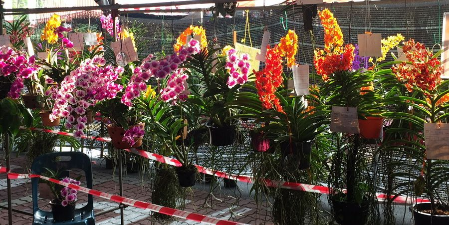 Orchids Show - Taiping -  23-31/12/2017