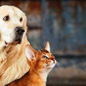 Le pot Solidaire.fr : Sauvons nos chiens et nos chats sur RTL
