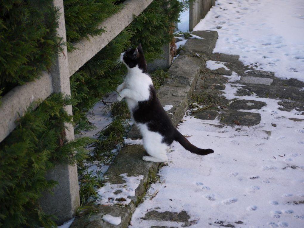 Album - neige à saint maur 2010