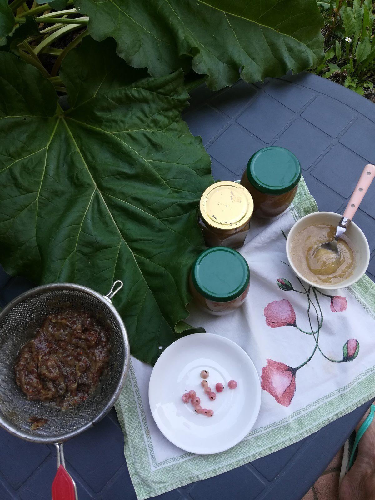 Confiture groseilles blanches et rhubarbe à la vanille