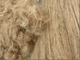 le Lin : fleur, fibres..., tissu.