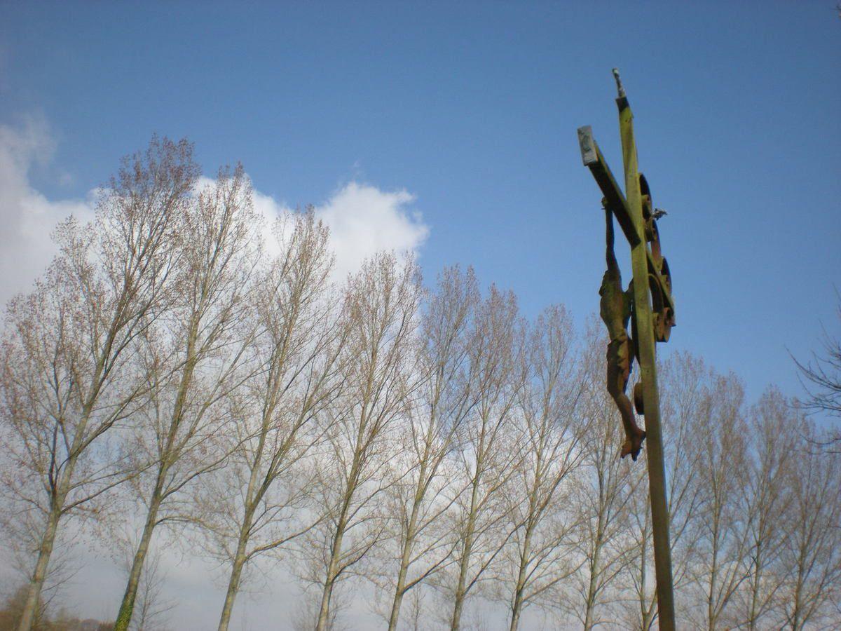 Contay. Rideau de peupliers vus du cimetière. Mars 2009. © Jean-Louis Crimon