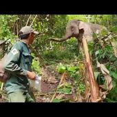 Elephant tracking in Nam Pouy National Protected Area by the ECC team