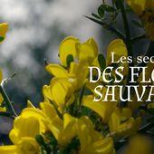 Les secrets des fleurs sauvages - Sous le soleil - Regarder le documentaire complet   ARTE