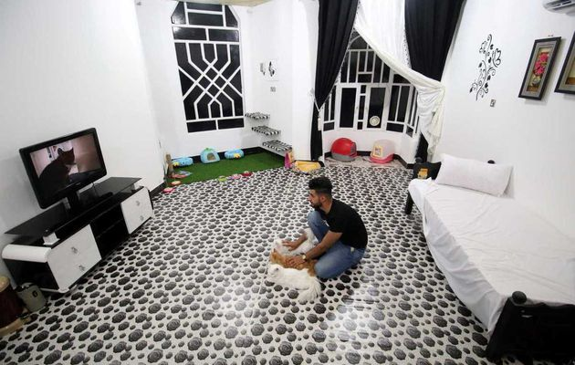 Déjà ouvert le premier hôtel de chat en Irak