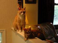 les chats... et les petits