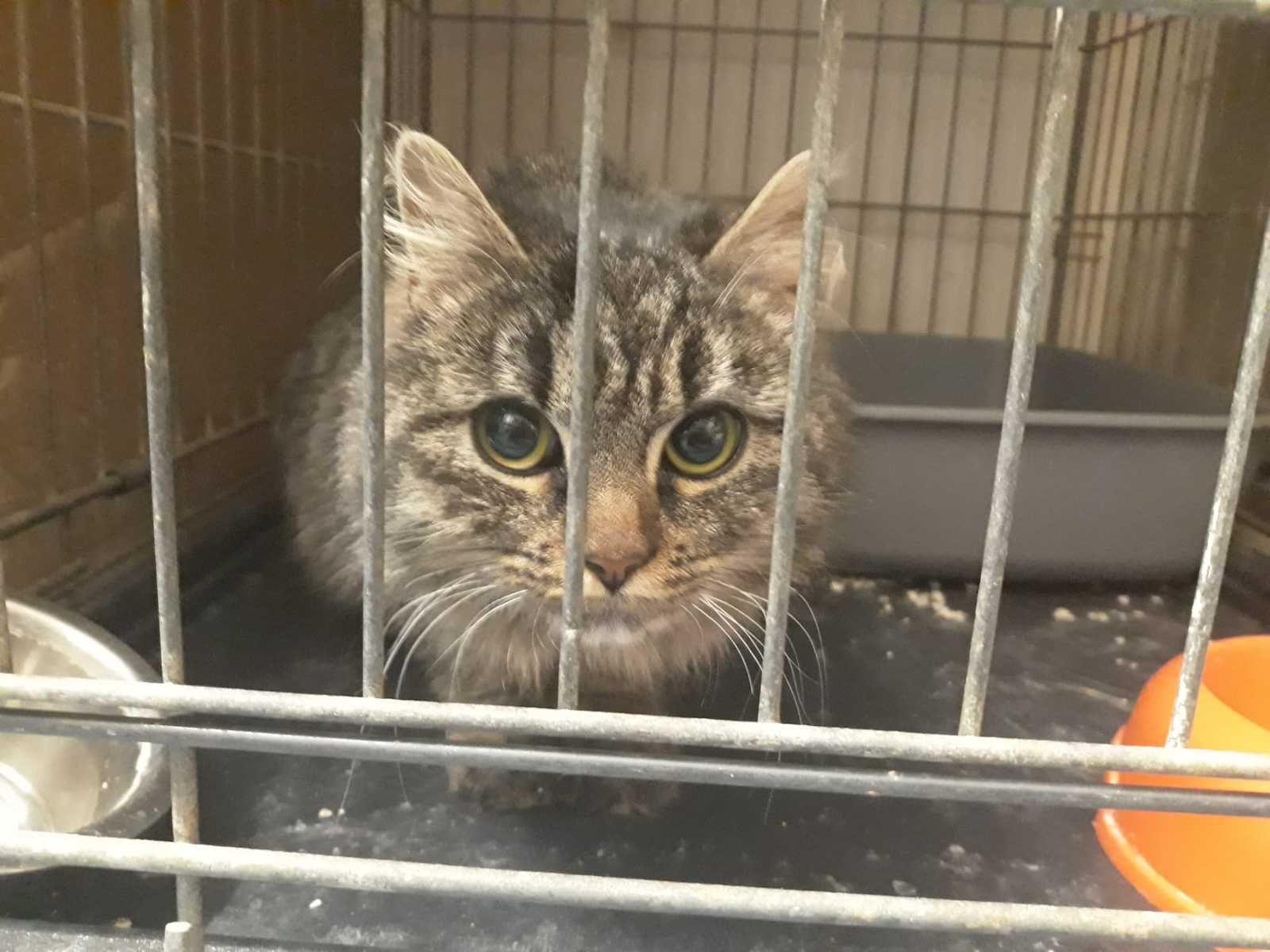 Elle est adoptée !!! :  SMARTIE, jolie jeune chatte trouvée dans un jardin