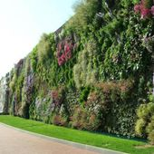 Vertical Gardens are perfect for Offices